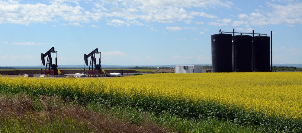 canola field with pumpacks and oil tanks